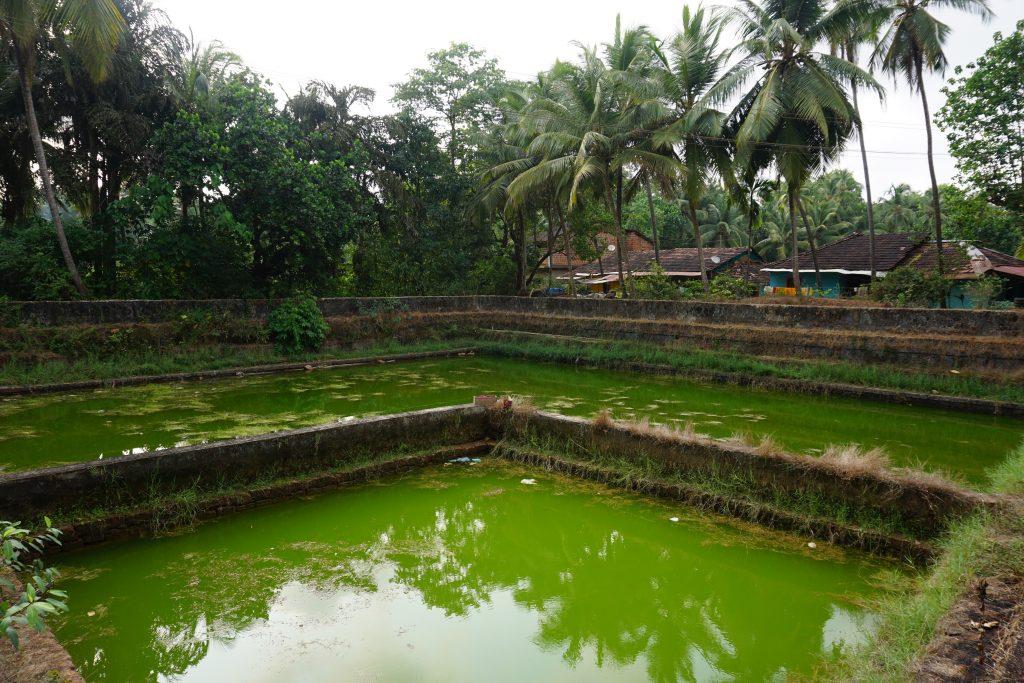 Goa gezilecek yerler - Şehrin her yeri yemyeşil