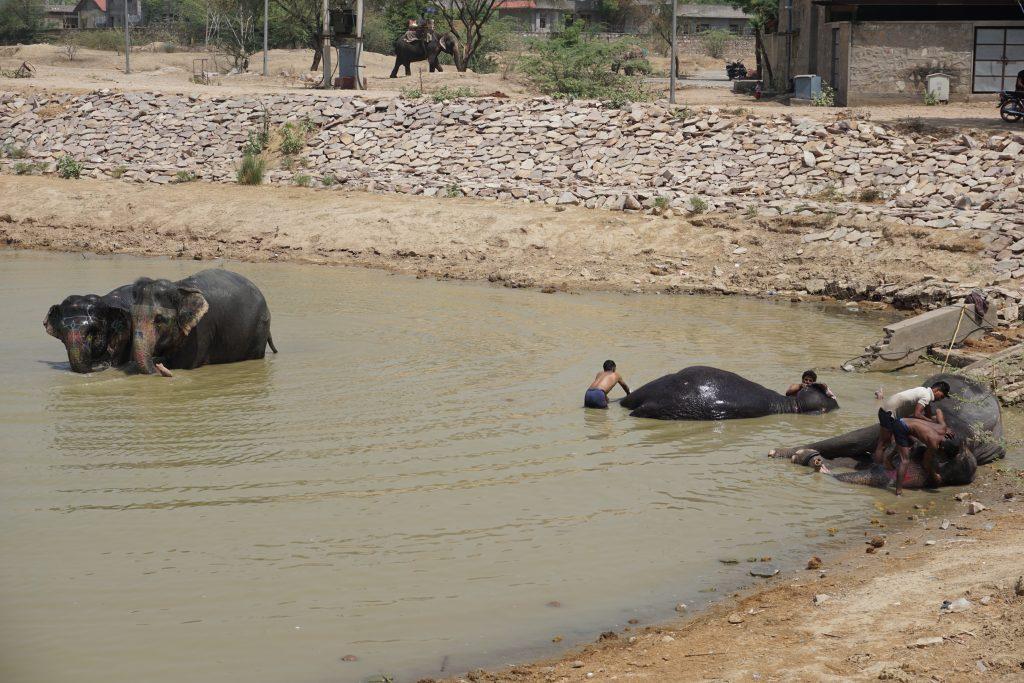 Jaipur gezilecek yerler - Filler evi