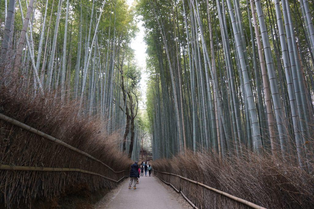 Kyoto gezilecek yerler - Bambu ormanı